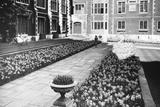 Kew Gardens Daffodils - Fotografik Baskı