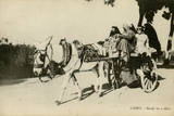 Native Transport in Cairo, Egypt Photographic Print