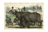 Rhinoceros and Dogs C1845 Giclee Print