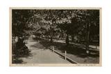 Rothschild Boulevard, Tel Aviv, Israel Photographic Print
