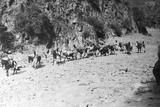A Mule Caravan Photographic Print