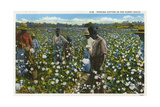 Cotton Plantation Giclee Print