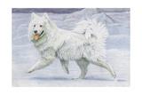 Siberian Reindeer Dog or Samoyed Giclee Print