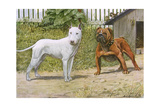 Bull Terrier and English Bulldog Giclee Print