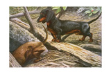 Two Dachshunds Giclee Print