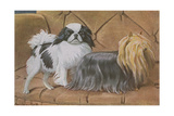 Two Dogs on a Sofa Giclee Print