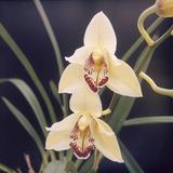 Plants, Orchid Photographic Print
