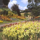 Guildford Castle Gardens Photographic Print