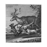Stag and Hounds Giclee Print