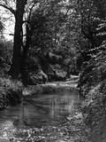 River Lea Tributary Photographic Print