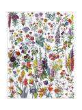 Annual and Biannual Flowers Giclee Print