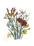 Freesia and Others Giclee Print