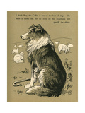 Sheepdog Guarding Flock of Sheep Giclee Print