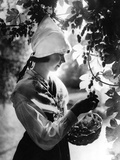 Swedish Hop Picker Photographic Print