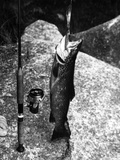 Large Trout Catch Photographic Print