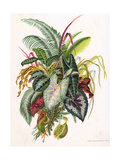 Pretty Foliage Giclee Print
