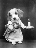 Beagle Puppy with Candle Photographic Print