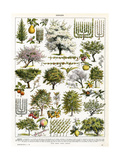 Trees, Orchard Trees Giclee Print