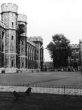 Tower of London Ravens Photographic Print