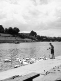 Feeding the Swans Photographic Print