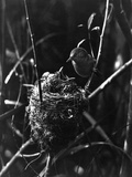 Cuckoo in the Nest Photographic Print