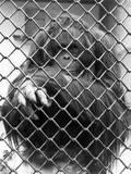 Caged Orangutan Photographic Print