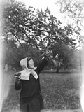 Girl Picking Apples Photographic Print