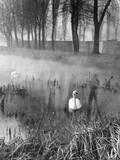 Mysterious Waters Impressão fotográfica