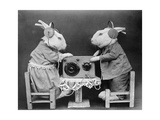 Radio Rabbits Photographic Print