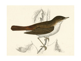 Nightingale, Morris Giclee Print