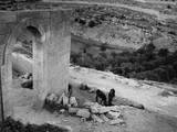 Jesrusalem, Gethsemane Photographic Print