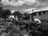New Zealand Back Garden Photographic Print