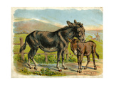 Donkey and Foal by a Fence Giclee Print