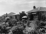 New Zealand House Photographic Print