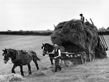 Harvest Horse and Cart Photographic Print
