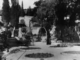 The Garden of Gethsemane Photographic Print