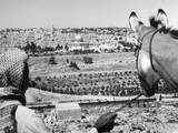 Jerusalem Donkey Photographic Print