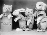 Animal Ticket Queue Photographic Print