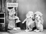 Puppies Going to School Photographic Print