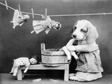 Doggy Laundress Photographic Print