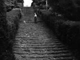 Milton Abbey Turf Steps Photographic Print
