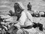 Israeli Shepherds Photographic Print