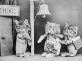 Cats Going to School Photographic Print