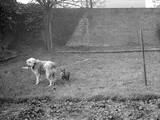 Dog and Cat in a Garden Photographic Print