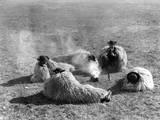 Hungarian Herdsmen Photographic Print
