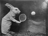 Bunny Tennis Photographic Print
