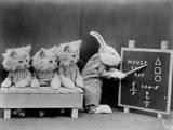 Animal Classroom Photographic Print