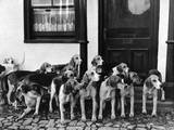 Tickham Foxhounds Papier Photo