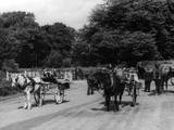 Irish Jaunting Cars Photographic Print