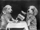 Doggy Coffee Break Photographic Print
